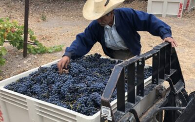 Hydeout Sonoma and Dysfunctional Family Winery grape harvest 2019 wraps up…