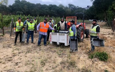 Harvest in Sonoma Valley, from Vineyard to Winery, the 2021 season